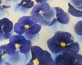 Choose your Pansies Grown in Alaska over 25 Real Pressed Flowers Preserved and Dried 221 FL
