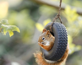 Giggling Squirrel Photo - Nature Photography - Animal Wall Art - Funny Squirrel