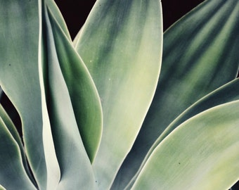 Botanical photography print sage green agave southwest desert style wall art - Mineral Green Agave
