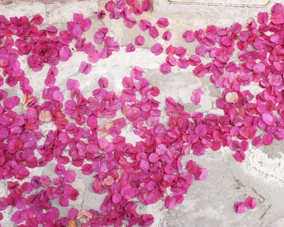 "Flower petals in the street - Greece photography - pink white - floral wall art - bougainvillea - 8x10 20x24 print ""Bounty of Flowers"""
