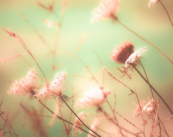 Fall decor, dreamy photo, pale pink,nature photography, seafoam green, queen anne's lace, autumn flowers, pearl, cream, nursery decor
