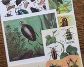 Beetle Bugs Vintage Insect Collage, Scrapbook and Planner Kit Number 2197