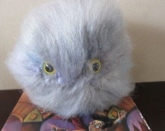 Pygmy Puff Grey with Blue and Purple Highlights