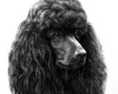 POODLE (Black) Standard Head Dog on One 16 inch Square Fabric Panel - for Quilting and Sewing