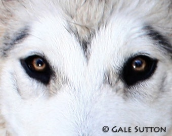 Dog, Dog's Eyes, Man's Best Friend, Fine Art Photo, Metallic Print, Gift for Dog Lovers, Wall Art, For Dog Lovers, Best Friends, Love