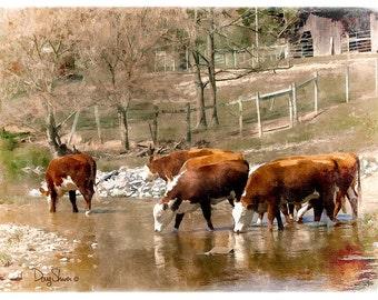 The Watering Hole - 16x11 - Rual - Cows - Farm Animals - Country - Art Decor - Home Decor - stream - livestock -