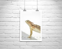 Reptiles, Lizards, Wildlife Art, Horned Lizard Print, Horned Toad Picture, Wildlife Photography, 5 x 7, 8 x 10, 8 x 12, 11 x 17, 16 x 24