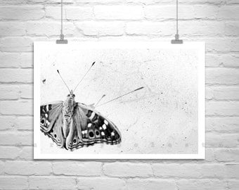 Black and White, Butterfly Photograph, Insects Art, Butterfly Print, Butterfly Art, Nature Photography, Insect Picture, Fine Art Photograph