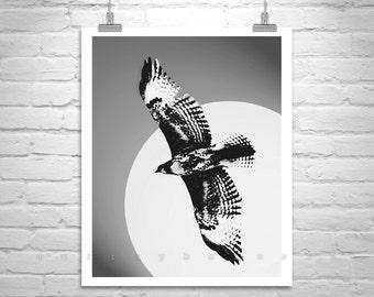 Hawk Photograph, Hawk Art, Hawk Bird Print, Bird Photography, Hawk Picture, Bird Art, Wildlife Art, Giclee Canvas Print, Bird Lover Gift