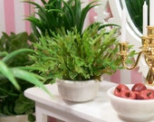 Fern Potted House Plant Green White 1:12 Dollhouse Miniature Artisan