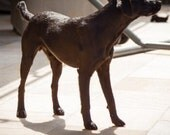 Custom made dog sculpture felted