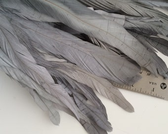 BELLISSIMA  Tail Feathers /Steel, Pewter grey /  177