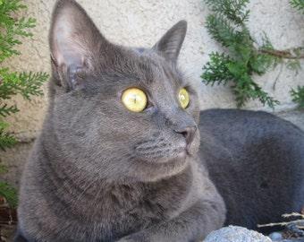 Pet Memorial Jewelry Necklace - Loss of Cat Kitty Kitten Pet - Grief Memorial Keepsake - In Memory Of - RIP - Forever in my Heart - AMETHYST