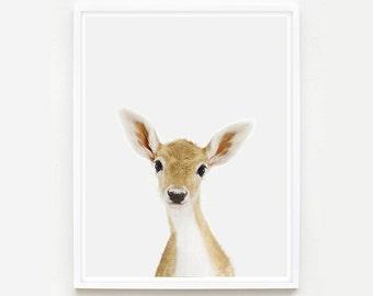 Animal Nursery Art. Baby Deer Little Darling. Fawn Print. Animal Wall Art.  Animal Nursery Decor. Baby Animal Photo.