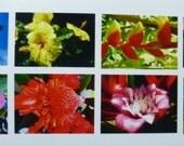 Hawaii photo cards, box of 8 (5 x 7 cards).