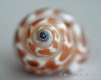 A Shell in Soft Focus Photo