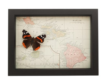 Framed Map of Hawaii with real butterfly