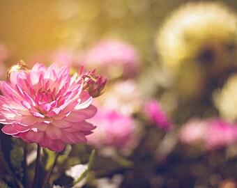 Nature Photography flowers flower photograph summer golden light gold beauty romantic for her women pink yellow home decor wall art fine art