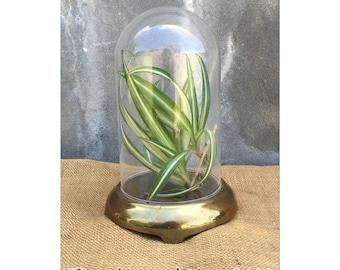 Cloche - Glass Cloche - Cloche Glass - Bohemian Decor - Chinoiserie Decor - Glass Display Case - CHIC