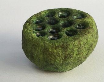 Mossy Green Ceramic Holey Lotus Wall Art Pod