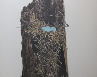 Eastern Bluebird Nest and Eggs, Color Plate, Vintage Book Page Print, Unframed Print, 10.5 x 13 in, Nature Print, Ornithology Print