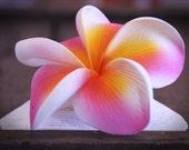 Pink Flower Hair Clip, Pink and Yellow,  3 3/4 Inch, Frangipani,  Beach Wedding, Bridal Hair Accessory