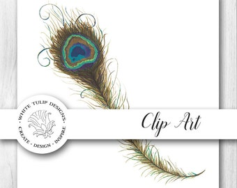 Watercolor Clipart - Peacock Feather, Instant Download, Handpainted, Detailed Artwork