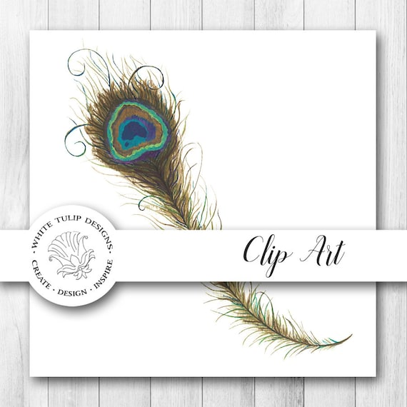 Watercolor Clipart Peacock Feather Instant Download