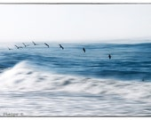 """Waves, Beach Photography, Fine Art, Ocean Decor Birds and waves. 8x12, 11x14, 16x20 and more.""""Art of flying."""""""