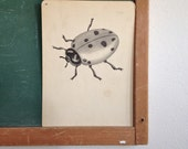 Vintage School Flashcard- Ladybug