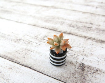 Grey Echeveria agavoides in striped vase for dollhouse in 1:12 scale