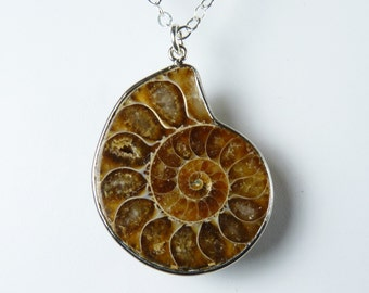 Caramel, Butterscotch, and Cream Ammonite Fossil Necklace, Genuine Ammonite Fossil Pendant, Sterling Silver Chain