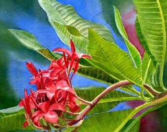 Red Plumeria Flowers, Frangipani, tropical flowers,watercolor painting,original watercolor,floral watercolor,red flowers,tropical flowers
