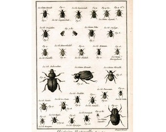 1788 INSECTS BEETLES ENGRAVING original antique insect engraving bug print