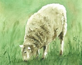 Original Watercolor of Sheep