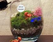 Dragon  RAWR Moss Terrarium, Great Low light,  DESKTOP BUDDY