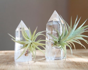 Air Plant on Quartz Crystal, Small Size, Treat Yourself, Little Something, Wedding Favor Idea Unique Air Planter, Gift For Friend