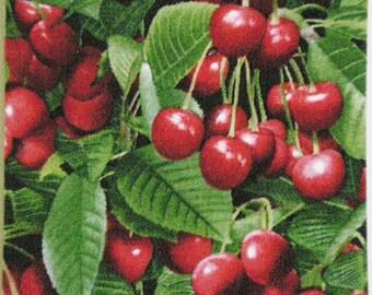 Cherries set of 4 Coasters