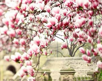 Central Park Print, Magnolia Trees, Pink, Beige, Pastel, New York Print, Vertical Photo, Neutral, Central Park Spring