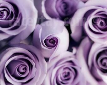 Flower Photography, Purple Roses, Macro Flower Photo, Shabby Chic, Pastel, Mauve, Purple Wall Art, Paris Print
