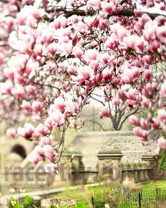 Central Park Print, Magnolia Trees, Pink, Beige, Pastel, New York Print, Romantic, Neutral, Central Park Spring
