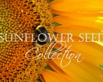 Sunflower, Rare Heirloom Sunflower Seed Collection | Brillaint  Sunflowers in Various Colors ~ 8 Individual Packets for the Home Gardener!