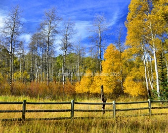 Autumn Landscape, Fall Colors, Home Decor, Aspen Autumn Leaves, Fine Art Photo