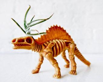 Dee the Dimetrodon - Dinosaur Air Plant Garden Gift - Prehistoric Fun - Vegetarian Reptile Pet