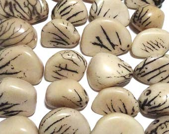 Five Off White, Tagua Nuts, Seeds, Natural Beads, EcoBeadsTagua