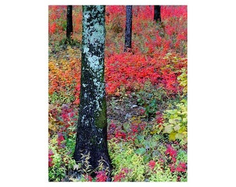 """Fine Art Color Nature Photography of Autumn Foliage - """"Sumac Slope and Lichen Tree"""""""