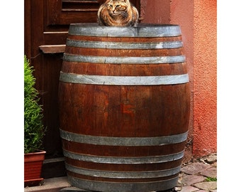 Fine Art Color Portrait Photography of Cat On a Wine Barrel in France