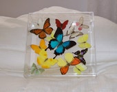 20% Off List Price--Use Coupon Code: 6ANNIVERSARY--Storewide Sale--Real Exotic Butterflies Gracefully Arranged in a Beautiful Swarm