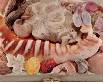 Beach decor storage, treasure chest, memory box, mens jewelry box, nature lover keepsake