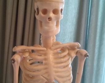 skeleton display-doctor skeletal display